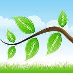 La responsabilidad ambiental como estrategia empresarial