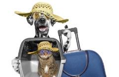 Soluciones que te ayudan a optimizar el transporte de animales