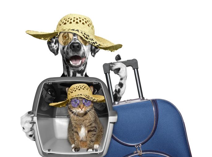 transporte animales