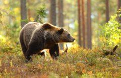 Comercio con fauna y flora: ¿qué es el Certificado CITES?
